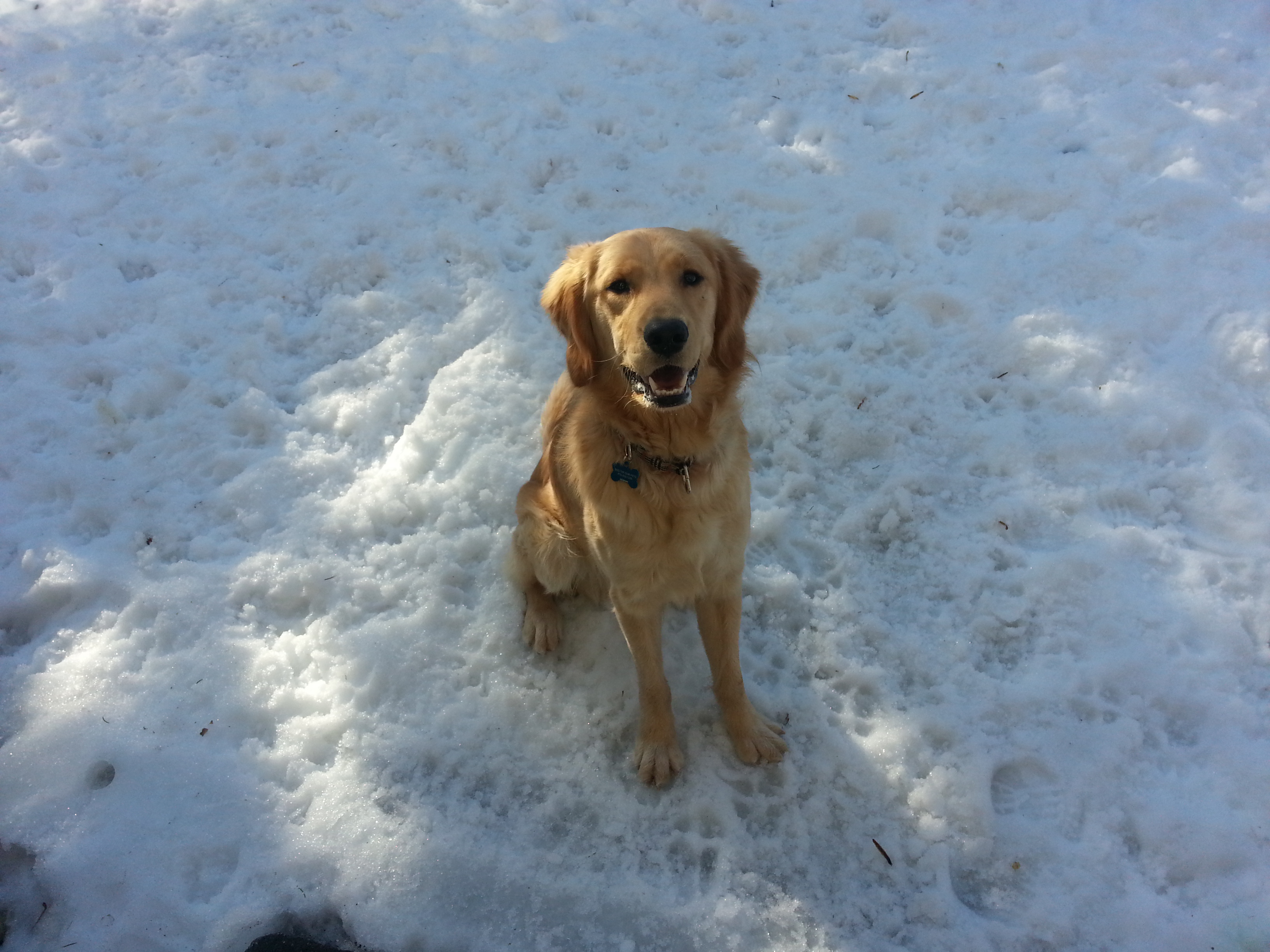 The snow didn't stop this guy from playing fetch with his foster family!